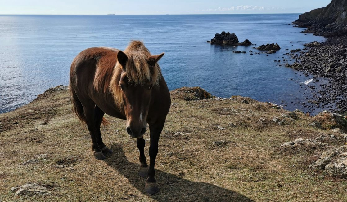 Horse on the coast