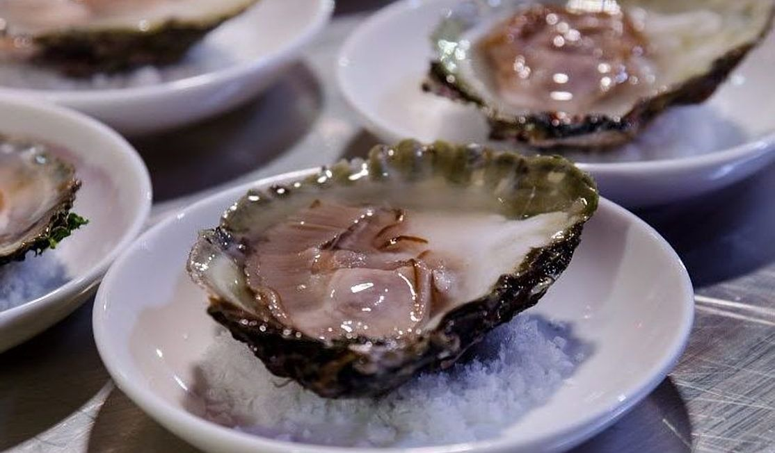 Oysters ready to eat