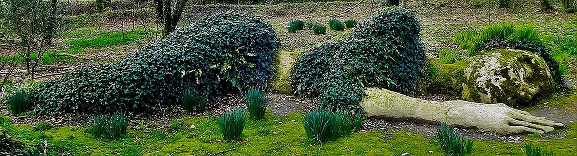 Lost Gardens of Heligan sleeping giant