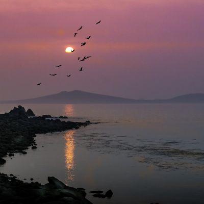 Bryher at sunset