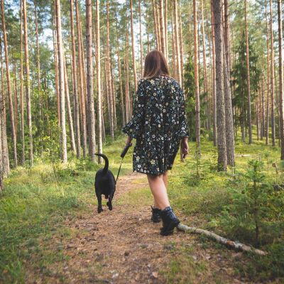 dog walking in a forest